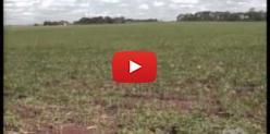 Embedded thumbnail for Instalação da fábrica de proteína de soja em Campo Grande