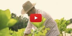 Embedded thumbnail for Dia do Trabalhador Rural