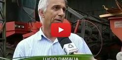 Embedded thumbnail for Termina colheita da soja em Mato Grosso do Sul - Globo Rural