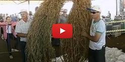 Embedded thumbnail for Concurso pé de soja solteiro 2013 - Globo Rural