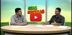 Embedded thumbnail for MS tem safra recorde de soja e expectativas positivas para o milho - AgroBrasil TV