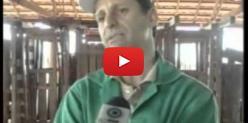 Embedded thumbnail for Curso de Aplicação de Medicamentos em Bovinos do Senar/MS