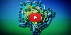 Embedded thumbnail for #SenarMSQualifica #Bovinocultura de Corte