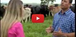 Embedded thumbnail for Diretor da Famasul, Ruy Fachini, fala do mercado do boi ao MS Rural